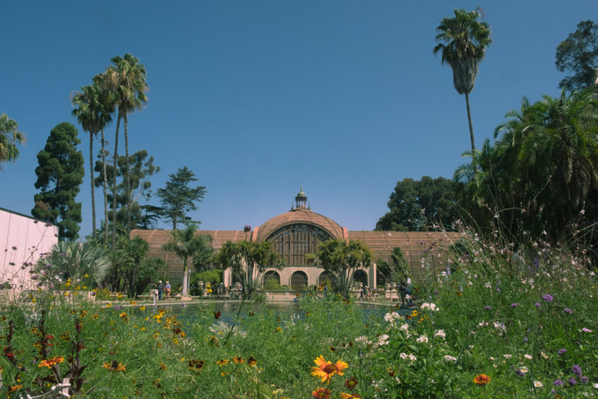 green house with palm trees and flower garden