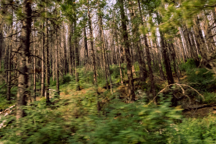 blurry view of trees inside a forest with a moving feel