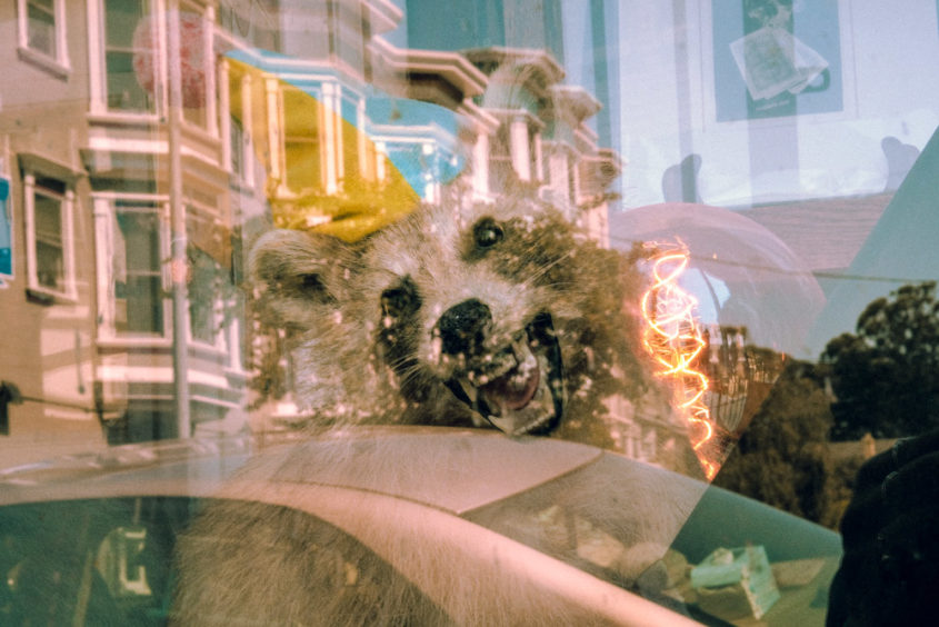 a window reflection of a house a racoon with a birthday hat and a car