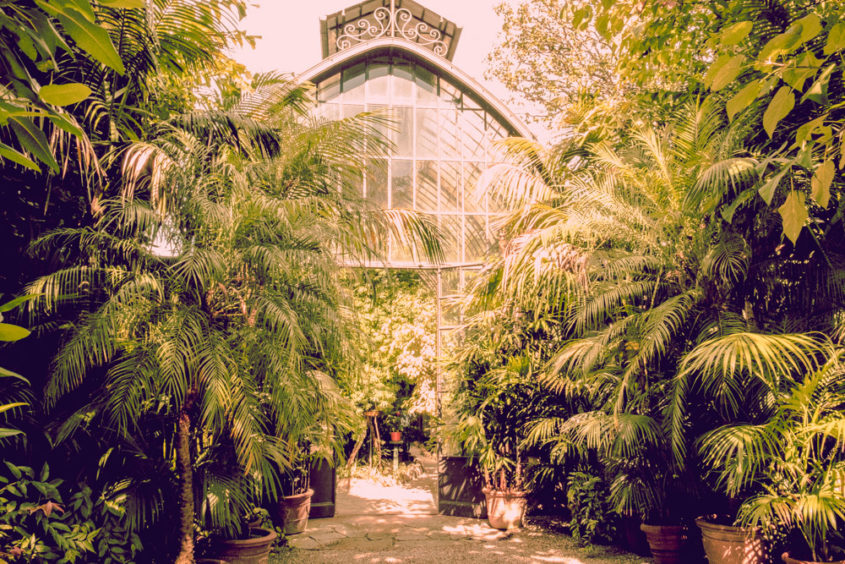 green house with giant green plants